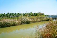 Grön expoträdgård i Zhengzhou Fotografering för Bildbyråer