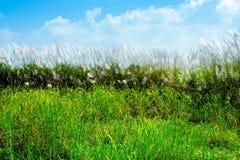 Grön fält- och gräsblomma fotografering för bildbyråer