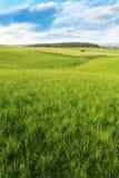 Grön fält, oklarheter och skog Royaltyfri Bild