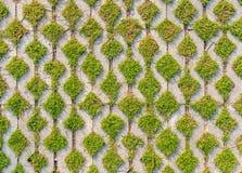 Grön fältbakgrund i texturerad betong på bana Royaltyfri Bild