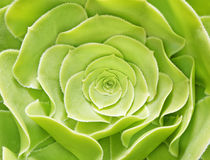 Grön färg för blomma arkivbilder