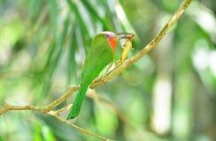 Grön fågel arkivbilder