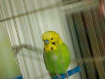 Grön fågel Arkivfoto