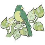 Grön fågel Fotografering för Bildbyråer