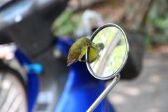 Grön fågel och spegel Arkivbild