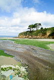 grön förorening för alger Royaltyfri Fotografi