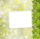 Grön filial av trädet och den pappers- ramen på abstrakt bakgrund Fotografering för Bildbyråer