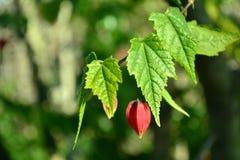 Grön filial med den unblown blomman Arkivbild