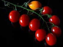 Grön filial med röda tomater och apelsinen royaltyfri foto