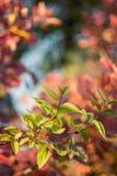 Grön filial på en bakgrund av Bush Royaltyfri Fotografi