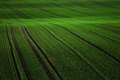 Grön filt Fotografering för Bildbyråer