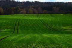 Grön filt #3 Arkivbilder