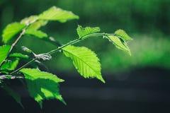 grön fjäder Arkivfoto