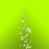 grön fjäder vektor illustrationer
