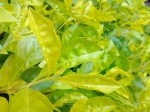 grön fjäder Arkivbild