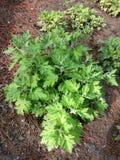 grön fjäder för blomma Arkivfoto