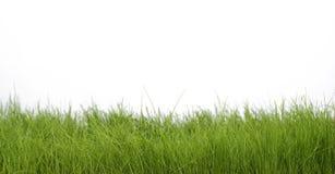 grön fjäder för gräs Arkivbild