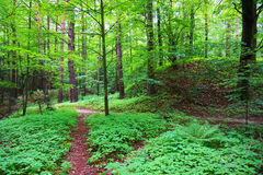 grön fjäder för skog Arkivfoton