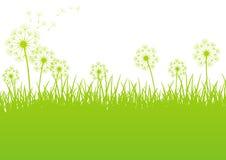 Grön fjäderbakgrund vektor illustrationer
