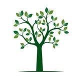 grön fjädertree också vektor för coreldrawillustration Royaltyfria Bilder
