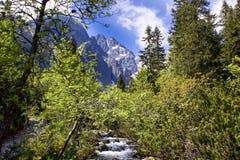 Grön flume 02 Fotografering för Bildbyråer
