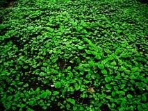 grön fred Royaltyfria Foton