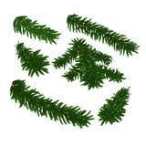 Grön frodig prydlig filial set vektor för filialgranillustratör bakgrund isolerad white Arkivfoton