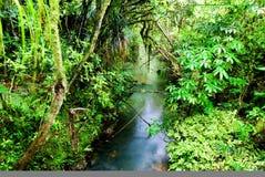 grön frodig rainforest Arkivfoton