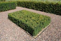 Grön fyrkantig häck Royaltyfria Foton