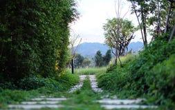 Grön gångbana arkivfoto