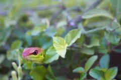 Grön gecko fotografering för bildbyråer