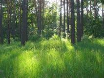 Grön glänta med ljusa solfläckar i lös skog Royaltyfri Foto