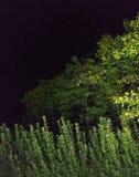 Grön glödande nattskogsammansättning royaltyfria bilder