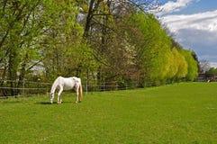 Grön gränd med ängen och den betande hästen Arkivfoto