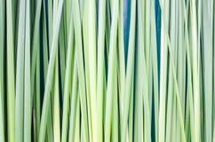 Grön gräsbakgrund Royaltyfria Foton