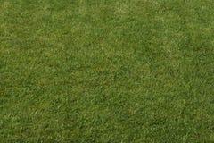 Grön gräsbakgrund Arkivfoto