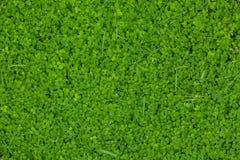 Grön gräsbakgrund Royaltyfri Bild
