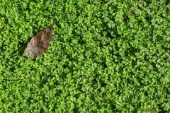 Grön gräsbakgrund Arkivbild