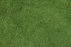 Grön gräsbakgrund Royaltyfri Foto