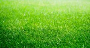 Grön gräsbakgrund Arkivbilder
