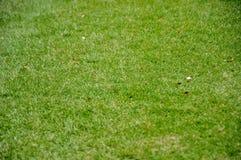 Grön gräsbakgrund Royaltyfria Bilder