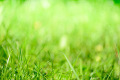 Grön gräsblurbakgrund Royaltyfri Foto
