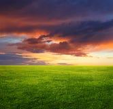 Grön gräsfält och aftonsky Arkivfoton