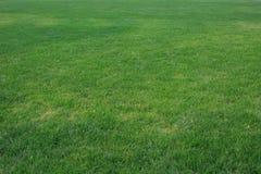 Grön gräsmattaï¼ ŒLawn i solen royaltyfria foton