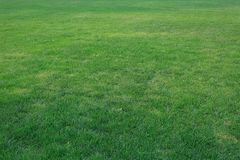 Grön gräsmattaï¼ ŒLawn i solen arkivbilder