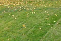 Grön gräsmattaï¼ ŒLawn i solen royaltyfri bild