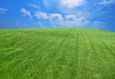 Grön gräsmatta royaltyfria bilder