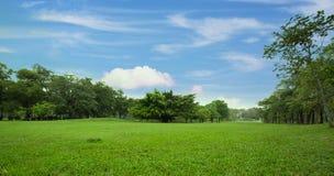 Grön gräsmatta av staden parkerar Royaltyfri Fotografi