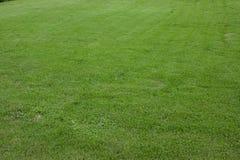 Grön gräsmatta för bakgrund Royaltyfri Foto