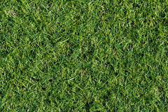 Grön gräsmatta för bakgrund abstrakt sikt för textur för park för lawn för green för bakgrundsstadsgräs Överkant v royaltyfria foton